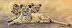 The Three Sisters - Fine Art Animal Prints & Paintings Oregon by Royce Kugler