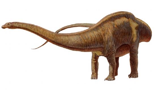 http://images.fasocdn.com/17670_517120l+v=201404171658c201404171658/seismosaurus.jpg
