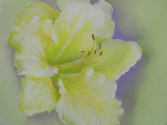 Frilly Lily by Carolyn Hancock Pastel ~ 8 x 10