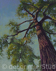 "Favorite Tree at Sunset by Cathy de Lorimier Pastel ~ 10"" x 8"""