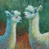 Llama Talk