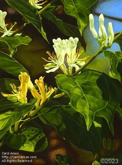 Honeysuckle Branch - Oil