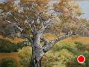 Oak in Afternoon by Dotty Hawthorne Pastel ~ 10.5 x 14.5