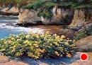 Cliffs at Shell Beach by Dotty Hawthorne Pastel ~ 26 x 32 (framed)