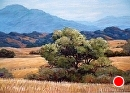 Ranchland Morning by Dotty Hawthorne Pastel ~ 16 x 22 (image)