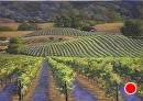 Rhythmic Rows by Dotty Hawthorne Pastel ~ 14.75 x 21