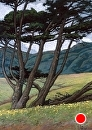 Cypress with Coastal Hills by Dotty Hawthorne Pastel ~ 20.5 x 15