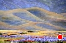 Evening Shadows Over Wildflower Carpet by Dotty Hawthorne Pastel ~ 11.5 x 17