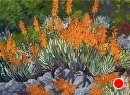 Aloe Garden by Dotty Hawthorne Pastel ~ 11 x 15 unframed