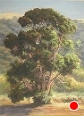 Afternoon Light on Old Eucalyptus by Dotty Hawthorne Pastel ~ 22.5 x 16.25