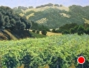 Vineyard Summer by Dotty Hawthorne Pastel ~ 17 image size x 23