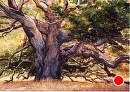 Sunlight on Old Oak by Dotty Hawthorne Watercolor ~ 9.5 x 13.5