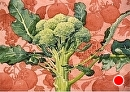 Beautiful Broccoli Crown by Dotty Hawthorne Watercolor ~ 9.5 x 13.5 (image)