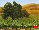 Vineyard Oaks by Dotty Hawthorne Pastel ~ 15 (image size) x 20