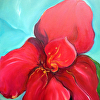 Red Canna