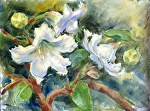 Hilanjika Flowers, Thailand by Carole Mayne Oil ~ 9 x 12