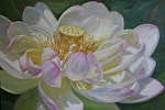 Curly White Lotus by Carole Mayne Oil ~ 24 x 36