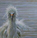 Un-ruffle by Carole Mayne Oil ~ 8 x 8