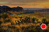 Sotol View by Mark Haworth Oil ~ 24 x 36