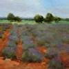 Texas Lavender