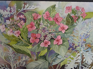 Lacecap Hydrangea with Dusty Miller by Judy Findley Watercolor ~ 22 x 28