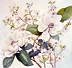 050 Magnolias with Dogwood by Judy Findley Watercolor ~  x