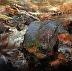 """""""Autumn Rustic"""" by Scott Mattlin"""