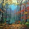 Carolina Autumn