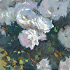 Carmel Roses