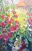 Hollyhocks 30x20 by Richard Oversmith