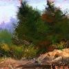 Sawtooth Cedars