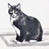Graphite Portrait of Boo the Cat