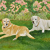 Portrait of Two Yellow Labs
