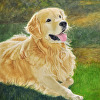 Portrait of Duffy the Golden Retriever