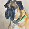 Mastiff Head Watercolor Portrait