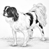 Japanese Chin Drawing