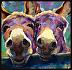 """""""A Couple of Clowns"""" by Sarah J. Webber Fine Art"""