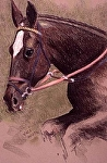 """Brown Mare"" by Vince Ornato Jr. Pastel ~ 20 x 16"