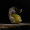 Wrapped Lemon #1