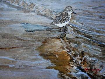 The Sandpiper by Gigi Genovese Acrylic ~ 11 x 14