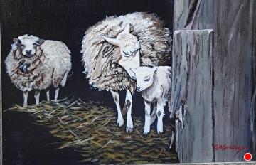 Barndoor sheep by Gigi Genovese Acrylic ~ 11 x 14