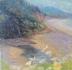 Indian Beach Daisies by Beverley Drew Kindley