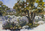 Inaja En Plein Air by Coko Brown Oil ~ 6 x 8