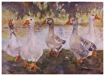 Lindo Lake Committee by Coko Brown Watercolor ~ 10 x 12