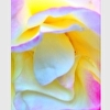 Enchantment iPhone Case by @annaporterartist
