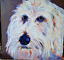 Seamus by Amity Perry Acrylic ~ 10 x 10