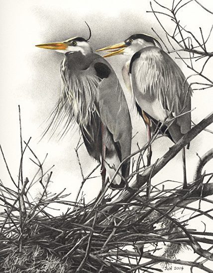 Rookery Pair - Colored and Graphite Pencils