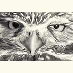 Sue deLearie Adair - Animal Expressions Society of Animal Artists Special Exhibition