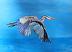 Bird  in Flight 2 by Susan Dull