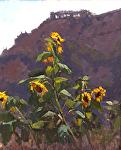 """Earth Bound Farms Sunflower by Mark Farina Oil ~ 20"""" x 16"""""""